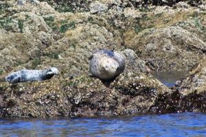 hi there, seal!