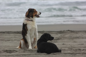 Good puppies