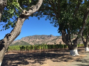 tranquil vineyard